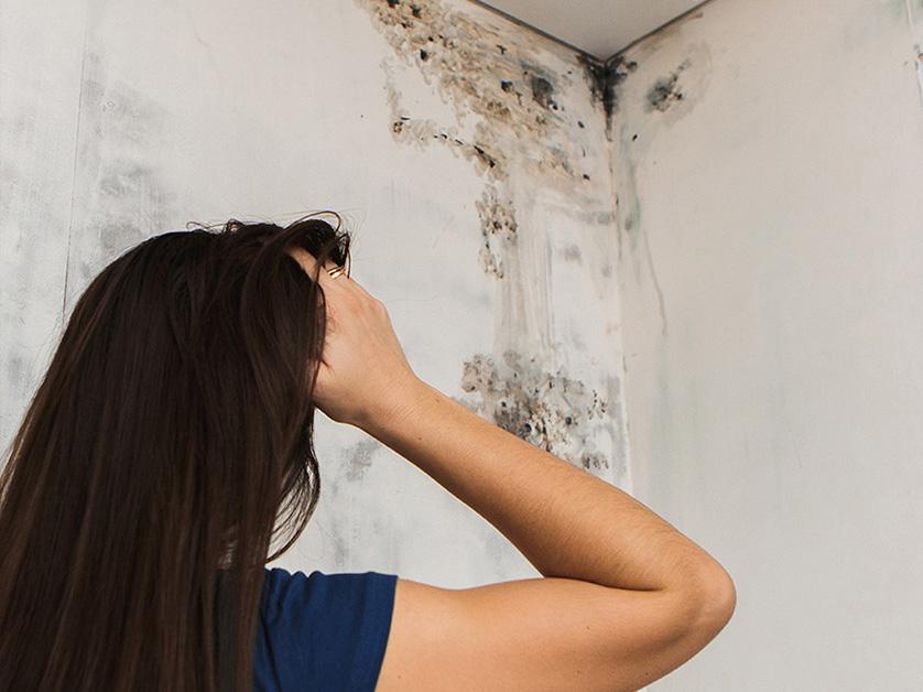 Feuchtigkeit und Schimmel im Keller Tipps vom Immobilienprofi